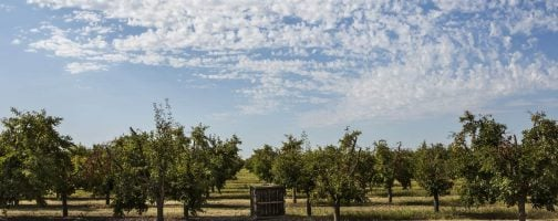 orchard with bins