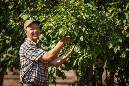 Joe (prune grower) in prune orchard