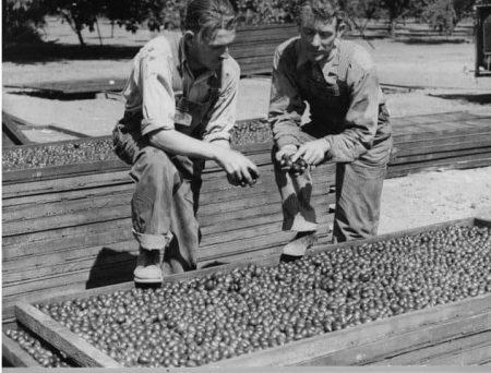 history prunes