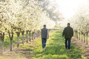 growers in blooming orchard