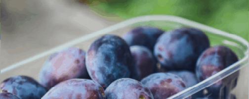 California Prune Board Projects 2020/2021 Crop Ahead of Harvest