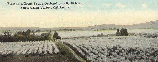 Santa Clara Prune Orchards